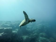 Παγκόσμια Ημέρα Περιβάλλοντος: Αμείωτος ο ρυθμός απώλειας της βιοποικιλότητας