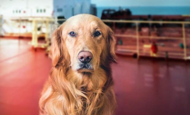 Παγκόσμια ημέρα σκύλου: Ένας σύντροφος εν πλω
